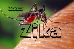 Luke 21:11 And great earthquakes shall be in divers places, and famines, and PESTILENCES: and fearful sights and great signs shall there be from heaven - Zika was first detected in Africa in the 1940s and was unknown in the Americas until last year, but has now been confirmed in Brazil, Panama, Venezuela, El Salvador, Mexico, Suriname, the Dominican Republic, Colombia, Guatemala and Paraguay, according to public health officials.  It is carried by the Aedes aegypti mosquito, which thrives in…