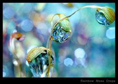 """""""Rainbow Moss Drops"""" Macro Photography By Sharon Johnstone"""