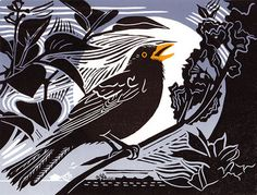 Blackbird by UK artist, Pam Grimmond Linocut print