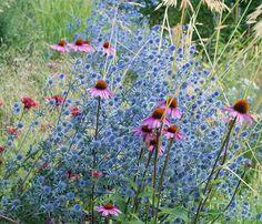 Tips på lättskötta perenner med lång blomning | Wexthuset Outdoor Gardens, Green, Flowers, Plants, Painting, Gardening, Art, Tips, Art Background