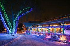 Zoolights - Calgary Zoo