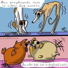 Do you have a greyhound or other sighthound? Do you have a greyhound or other sighthound? Funny Dog Jokes, Funny Dogs, Funny Animals, Greyhound Art, Italian Greyhound, Noodle Horse, Lurcher, Grey Hound Dog, Beautiful Dogs