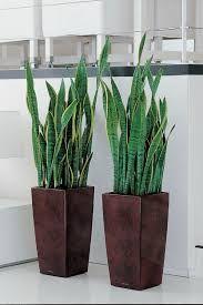 Image result for озеленение интерьера