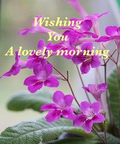 Good morning Happy Saturday Morning, Morning Msg, Good Morning Coffee, Good Morning Flowers, Good Morning Sunshine, Good Morning Messages, Good Morning Everyone, Good Morning Good Night, Good Morning Images