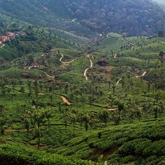 Tea plantation and Tree -house were the best of all Kerala India Trip, India Travel, Kerala India, South India, Beautiful World, Beautiful Places, Amazing India, Kerala Tourism, Munnar