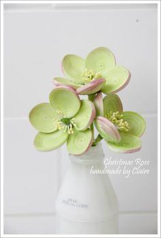 크리스마스 로즈 꽃입니다~ : 네이버 블로그