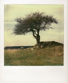 Hünengrab by Peter Männig on 500px #impossible #polaroid #photography
