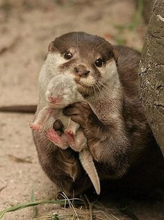 Mom and baby otter, look how proud she is of her lil baby..