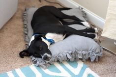 DIY No-Sew Dog Bed For Under $10 + Giveaway #IAMSVisibleDifference #IAMSDog #CollectiveBias