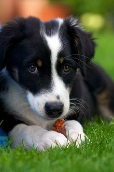 if i sent this picture to my boyfriend and made the same puppy eyes, i wonder if he would buy it for me