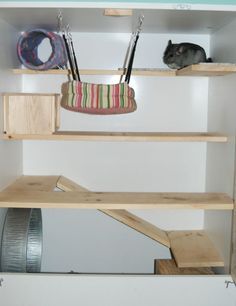 Image detail for -Custom Homemade Chinchilla Cage Chinchilla Care, University Of California Davis, Cute Ferrets, Rabbit Cages, Pet Cage, Animal Crafts, Hamster Ideas, Fun Facts, Projects To Try