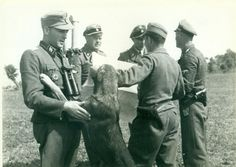 """Panzer Division """"Das Reich"""" - Before D-Day, France, From left… Luftwaffe, Ernst August, Military Working Dogs, The Third Reich, Military Photos, Portraits, German Army, D Day, Panzer"""