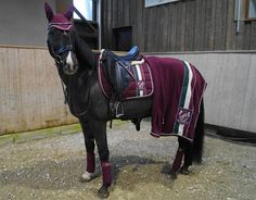 Hello my love! I DID IT ! Yesterday Dylara's first, but certainly not last, Eskadron . Equestrian Outfits, Equestrian Style, Equestrian Fashion, Cute Horses, Beautiful Horses, Eskadron Heritage, Horse Riding Clothes, Horse Fashion, Types Of Horses