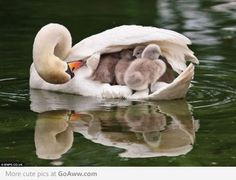 A real Mother's Love