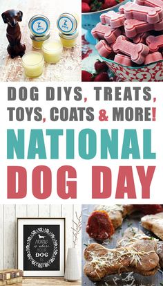 It's National Dog Day and we are celebrating with Dog DIYS, Treats, Toys, Coats & More National Dog Day Rocks.Hugs to the pups Buy Pets, Dog Crafts, Homemade Dog Treats, Outdoor Dog, Dog Supplies, Dog Owners, Dog Mom, Dog Days, Dog Training