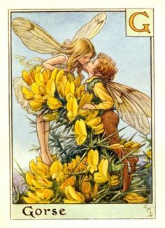 Cicely Mary Barker (1895-1973) Illustration of the Gorse Fairies for Flower Fairies of the Garden