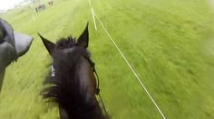 Rolex 2016 Helmet Cam: Elisa Wallace & Simply Priceless. Half way through watching this, I was exhausted. Why do the riders get all the credit? The stamina of the horse is amazing. This is a TOUGH course, esp the water jumps.