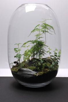 Decoración con plantas...