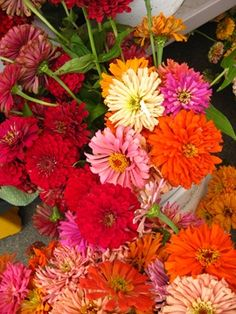 Beautiful flowers help us remember good memories...  Zinnias.  These were my Mom's favorite.