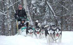 An Overnight Dog Sledding Experience for Adults and Kids Sled, Canada, Dogs, Lead Sled, Luge, Pet Dogs, Dog, Doggies