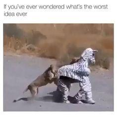 Funny Animal Jokes, Funny Animal Photos, Funny Animal Videos, Cute Funny Animals, Animal Memes, Funny Photos, Funny Images, Crazy Funny Videos, Super Funny Videos