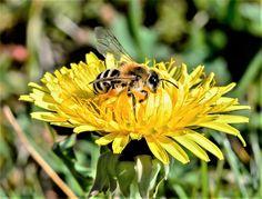 Free stock photo of animal beautiful bee