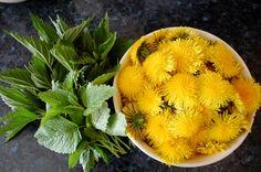 Pampeliško-kopřivový sirup s meduňkou ~ Ze zahrady do kuchyně