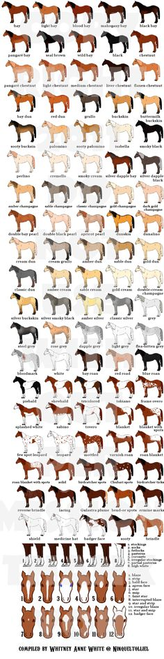 deviantART: More Like Chestnut Color Genetics Chart by ~MagicWindsStables Wow this is the most details horse chart I've seen. More ppl need to know how to identify specific horses by colors and facial features!
