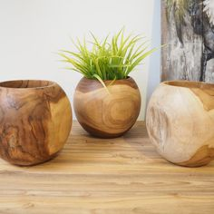 Our solid teak wood vases are a real statement piece, they have so much character and one of a kind. Great for displaying your kitchen herbs, flower arrangements, home accessories and display items. Hand finished and crafted from teak root that has been aged for several hundred years - sustainably sourced from Indonesia. Sanded and treated with wax to give an excellent smooth finish.