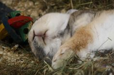 Bunny Is Conked Out - August 24, 2011