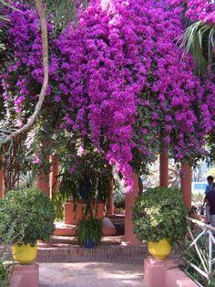 Jardin Majorelle, Marrakech                                                                                                                                                                                 Más
