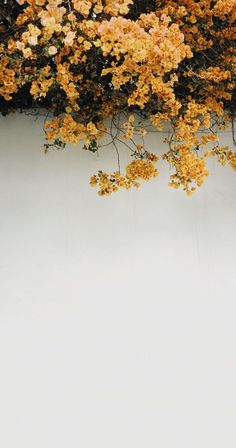 Image result for yellow tumblr wallpaper