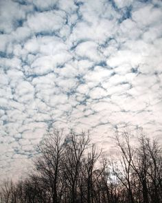 Sky. #sky #texture #sun #trees #clouds #float #glow #photo