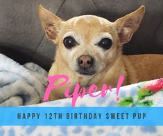 Happy 12th Birthday, Peter Piper, French Bulldog, Pup, Sweet, Dogs, Animals, Candy, Animales