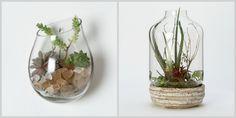 vasos em vidro e estufa em potes - Pesquisa Google