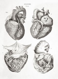 """Anatomy - Human heart: four figures. Engraving byThomas Milton, 1814, from: """"Human and animal anatomy: album containing a collection of engravings"""". Enlarge: https://www.pinterest.com/pin/287386019949611958/"""