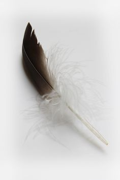 goose-feather-2 stillblog.net