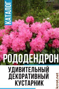Рододендрон: Описание, Посадка, Уход | (80 Фото) Небольшая Ферма, Цветочный Дизайн, Дом И Сад, Растения, Сады, Цветы