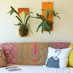 wall Plants Apartment Therapy - Create a (Living!) Statement Wall Piece with a Staghorn Fern. Plant Crafts, Garden Crafts, Diy Hanging, Hanging Planters, Staghorn Fern, Natural Bath Bombs, Landscaping Retaining Walls, Masonry Wall, Comfortable Pillows