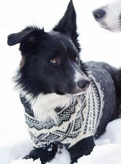 Ravelry: Rekkehuset's Hundegenser free pattern
