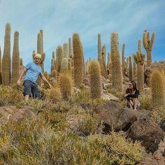 @marimoraestrips -  A valley with giant cactus on the way!  ___________________________  Um vale de cactos gigantes no caminho!  #mytraveljournal101 #desertodoatacama #atacamadesert #bolivia #chile #eltatio #geysers #euvounajanela #blogmochilando #sobrelugares #destinosincriveis #viagensincriveis #prefiroviajar #umviajante #exploremore #igrepresent #aquelasuaviagem #falandodeviagem #travelingram #sharetravelpics #amoviajar #instagood #jj #melhoresdestinos #lonelyplanet #tripadvisor
