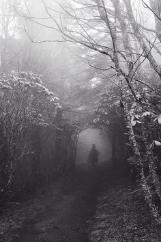 'Into the Faerie Wood' by Vaughn Teegarden