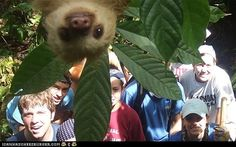 Photobombing sloth...