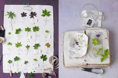 Herbarium - dietlind wolf: geranium