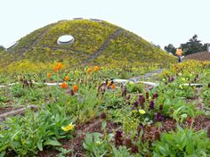 green roof at the CA Academy of Sciences