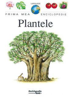 - Plantele -