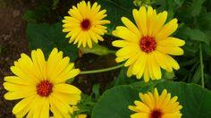 Ngắm vẻ đẹp các loài hoa đẹp trên thế giới với chất lượng 4K (Ultra HD)