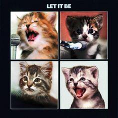 http://thekittencovers.tumblr.com    kitten covers. best tumblr ever.