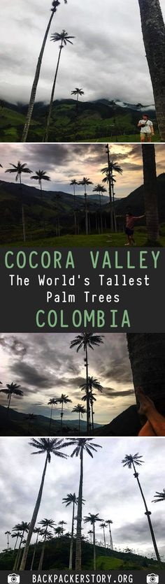The beautiful Cocora Valley is located in the middle of three big columbian cities: Bogotá, Medellín and the capital of salsa, Cali. Travel And Tourism, Us Travel, Travel Plan, Bucket List Destinations, Travel Destinations, Country Maps, Travel Guides, Travel Tips, Horse Carriage