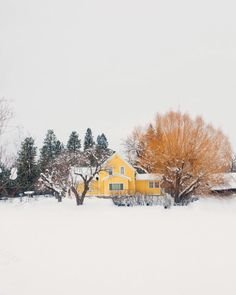 A splash of colour in the snow. I Love Winter, Winter Colors, Winter Time, Winter Season, Yellow Cottage, Yellow Houses, Winter Magic, Winter Photos, Winter Scenes